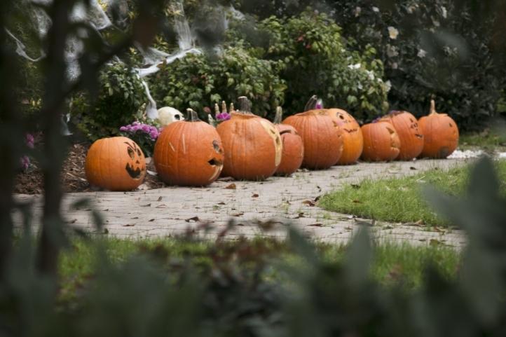 19257_pumpkins_jesushidalgo_onlinef